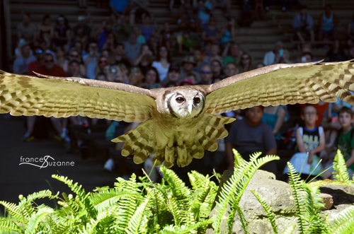 Owl in Flight {Disney, Animal Kingdom}